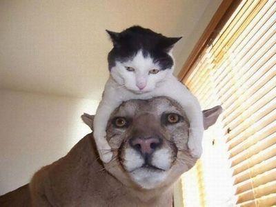 犬用防寒帽子