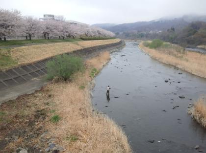 201303310644_相川橋上流S_SCA3K0248