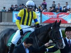パドック:イスラボニータと蛯名騎手