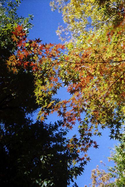 秋深し2012-10e