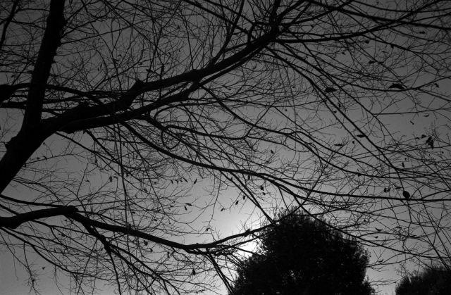 冬景色2013-02c
