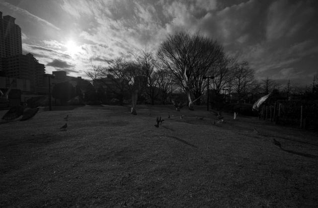 PigeonsFly05b