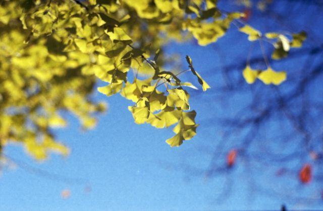 Yellow02d