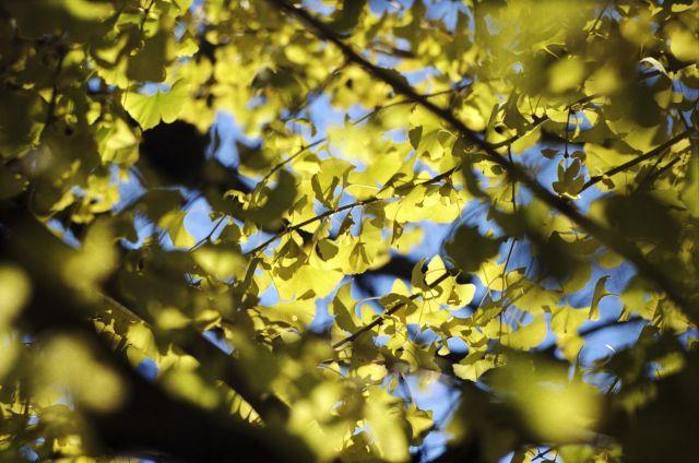 Yellow02e