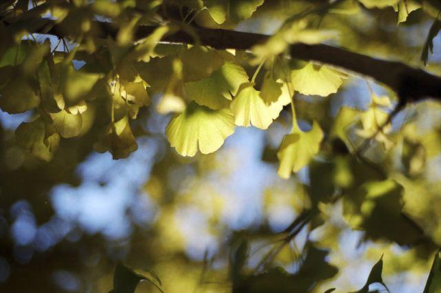 Yellow02f