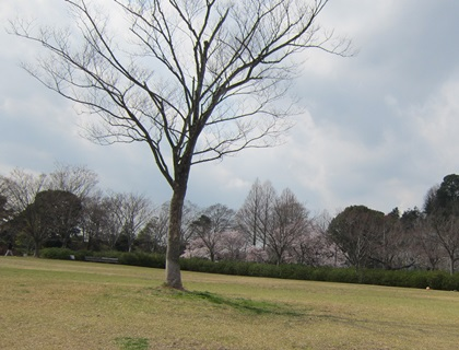 0323-公園