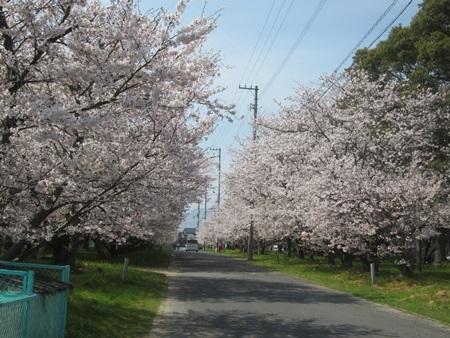 0404-桜