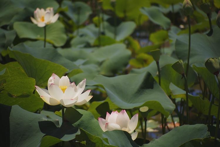 船頭平河川公園30