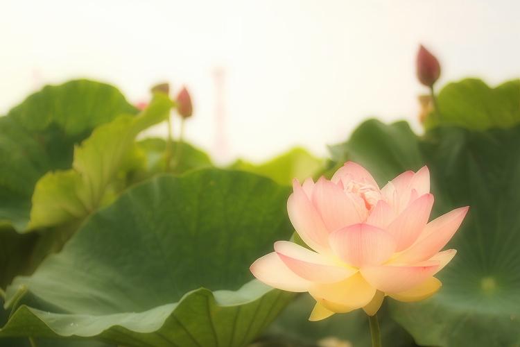 森川はす田2_03