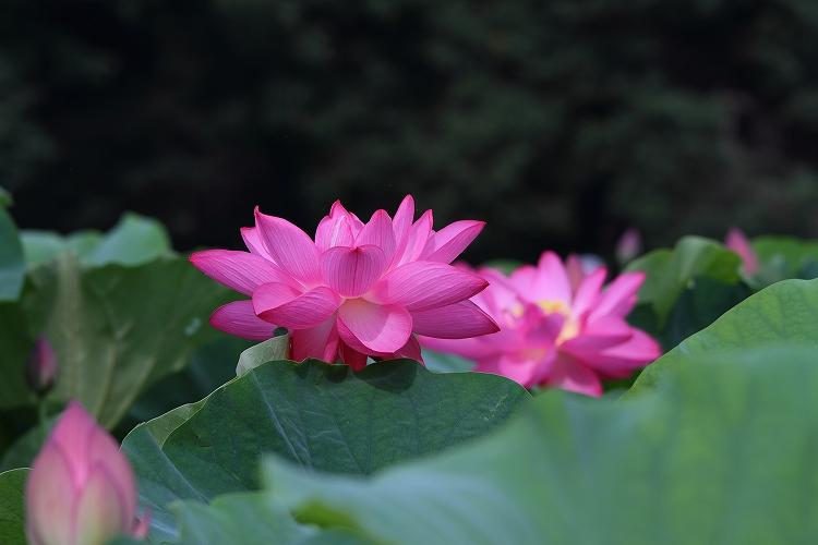 森川はす田2_25