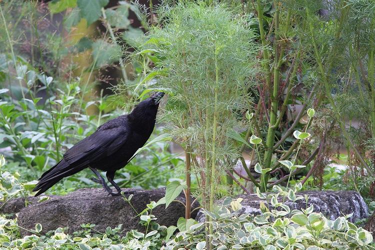 幼鳥が育つ01