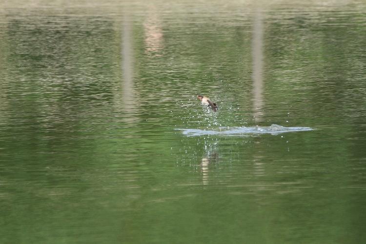 タマに水没21
