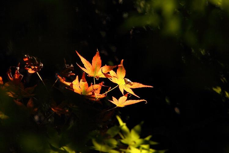 晩夏東山植物園24