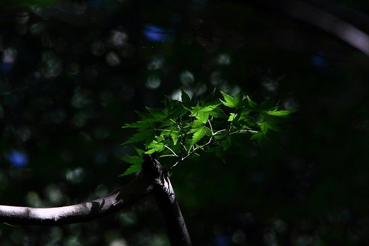 晩夏東山植物園23