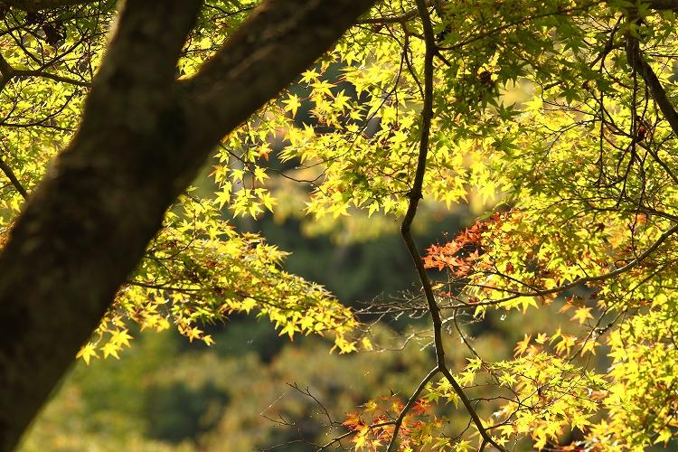 色付く前に香嵐渓にも行くか02
