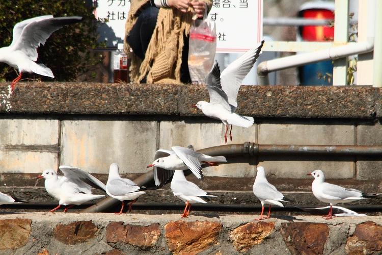 浜名湖佐久米駅11