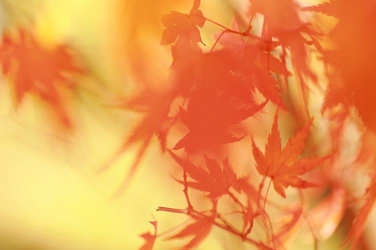 紅葉をマクロってどうなの01
