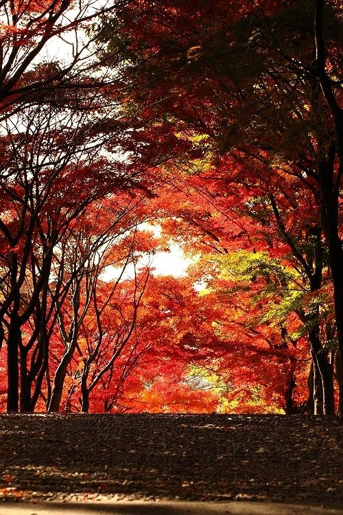 岡崎東公園11