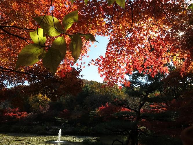 今年は綺麗な東山09