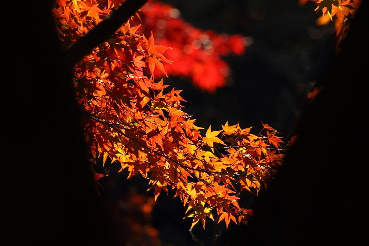 今年は綺麗な東山06