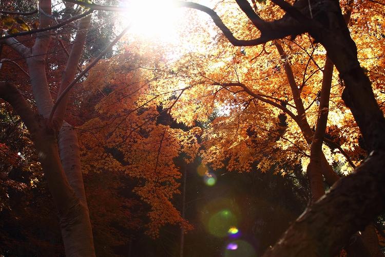 今年は綺麗な東山31