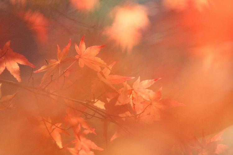 紅葉よりも野鳥02