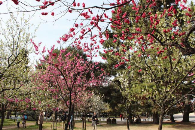 130401御所お花見散歩07