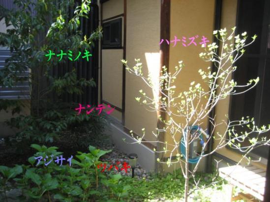 130409庭の植木
