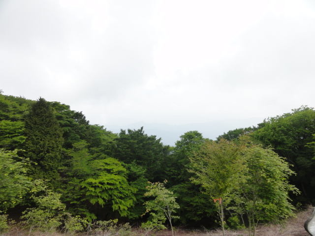天竜の森P