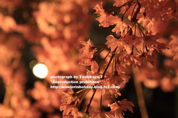 IMG_0258s.jpg