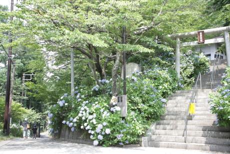 tenjouyama0001.jpg
