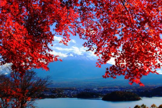 紅葉 河口湖キャンプ場 紅葉と富士山2