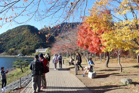 紅葉 もみじ回廊 湖畔