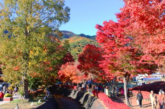 紅葉 もみじ回廊 入口