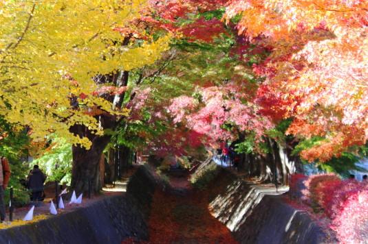 紅葉 もみじ回廊 中