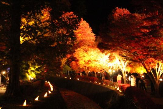 紅葉 もみじ回廊 ライトアップ 入口