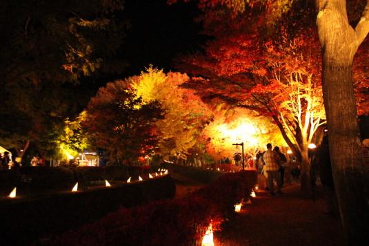 紅葉 もみじ回廊 ライトアップ 中