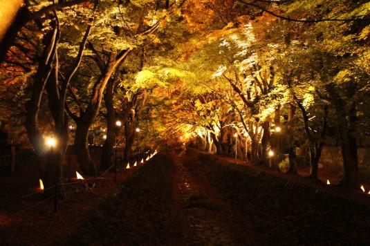 紅葉 もみじ回廊 ライトアップ 中反対
