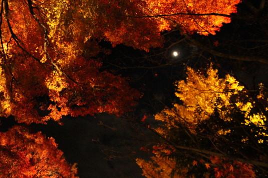 紅葉 もみじ回廊 ライトアップ 月