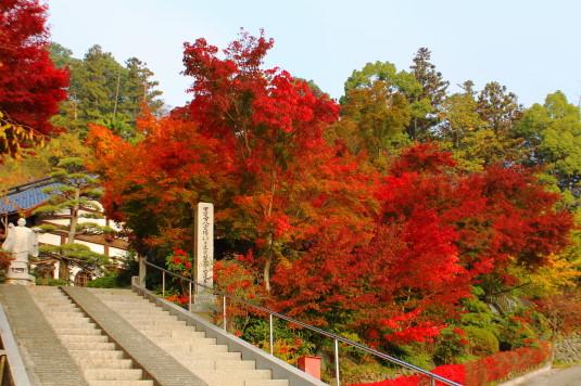 紅葉 蓮華寺 階段