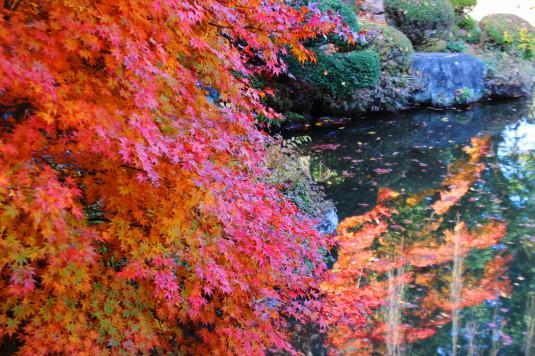 紅葉 恵林寺 庭園 池