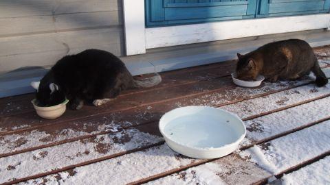 外ネコ二人
