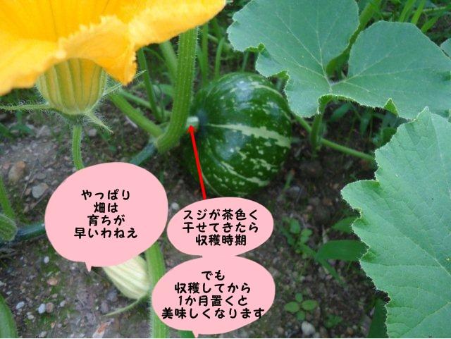 002_20120705174202.jpg
