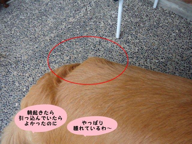 002_20120707203002.jpg