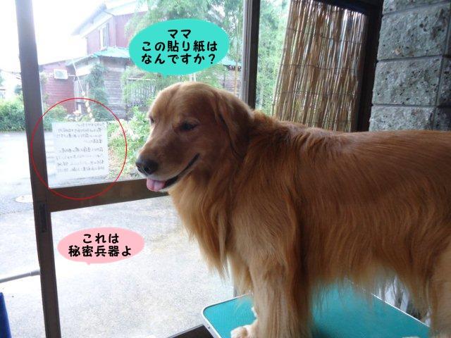 002_20120921203831.jpg