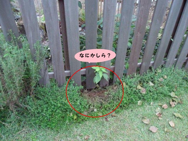 002_20121006200120.jpg