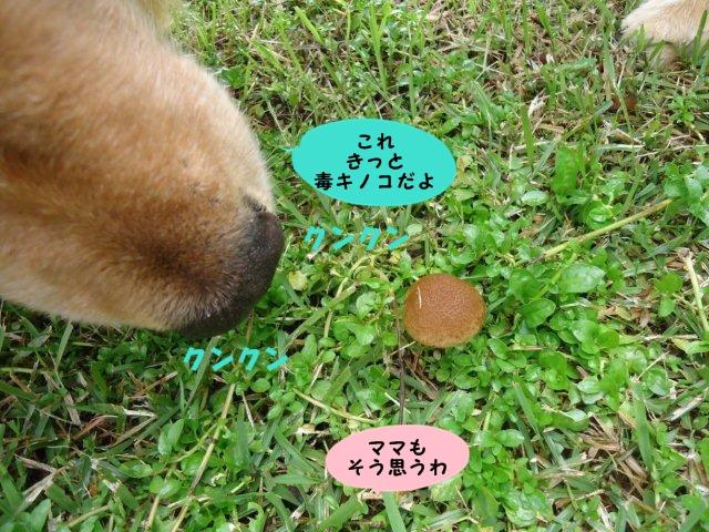 002_20121012201943.jpg
