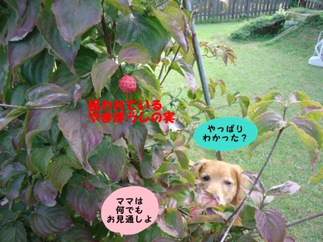 002_20121014205249.jpg