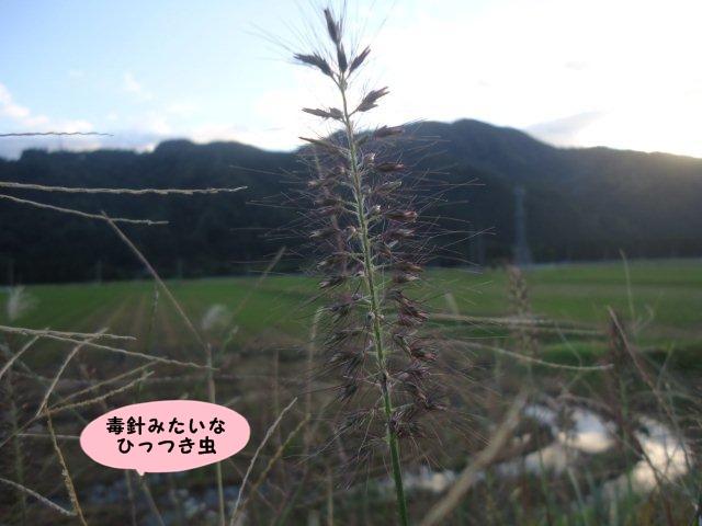 002_20121019202402.jpg