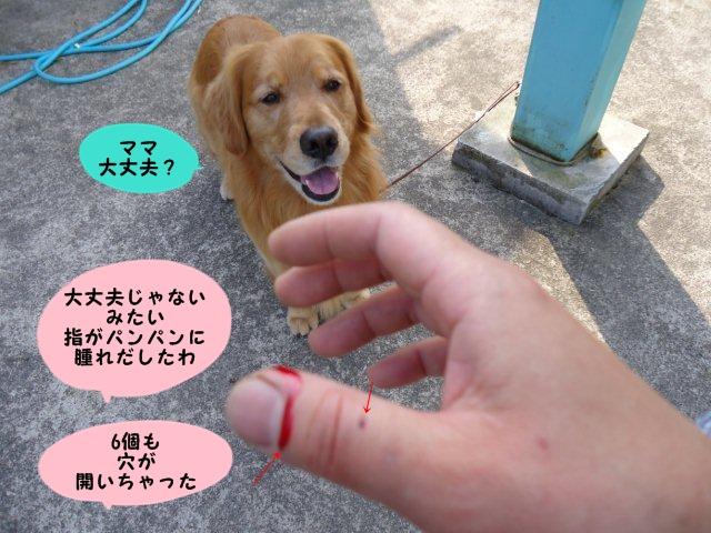 003_20120526201255.jpg